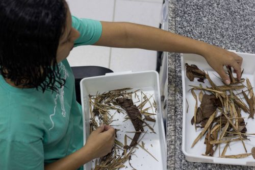 Biological and Terrestrial Research Collections